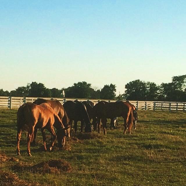 mels pic of horses